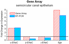 Graph showing Gene Array semicircular canal epithelium