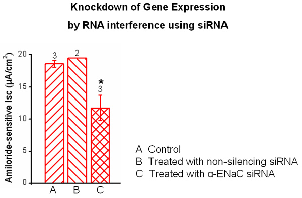 Graph showing Knockdown of Gene Expression by RNA interference using siRNA