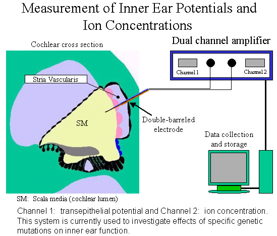 Measurement of Inner Ear Potentials and Ion Concentrations
