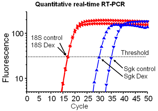 Graph showing Quantitative real-time RT-PCR
