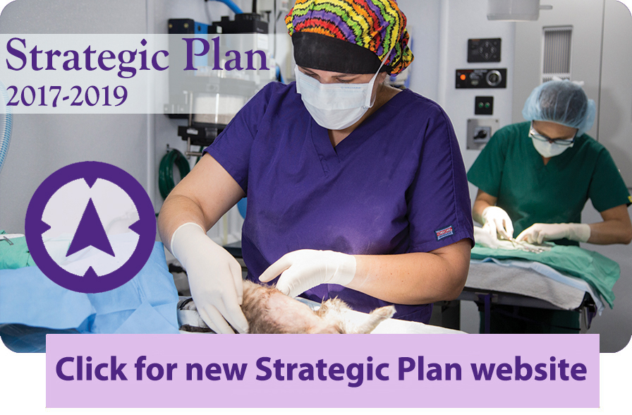 Stragic Plan 2017-2019 web page