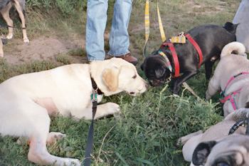 Scene from the Sept. 20 Canine Hike at Marlatt Park