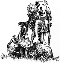 Sketch of 2 dogs with backpacks