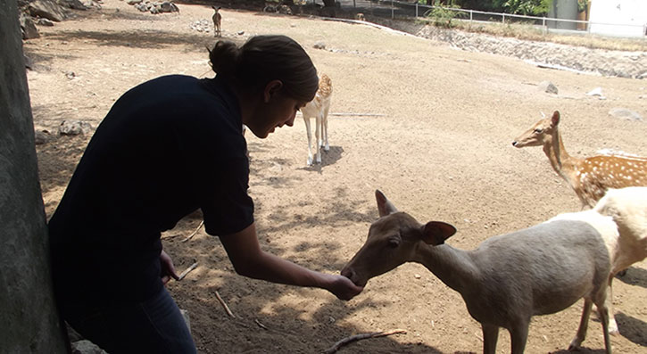 Sabra feeds a white tailed deer named Olga.