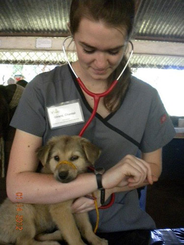 Chantal Girard examines a puppy