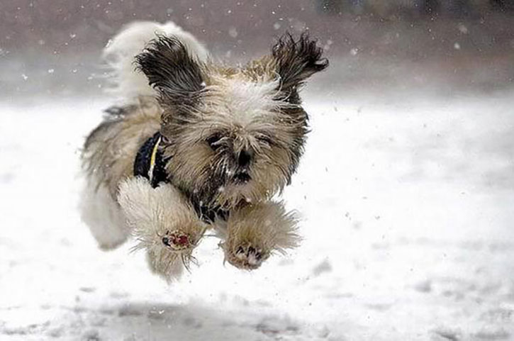 Dog runs in snow