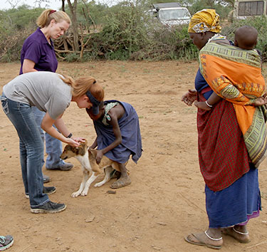 Vaccinating a canine