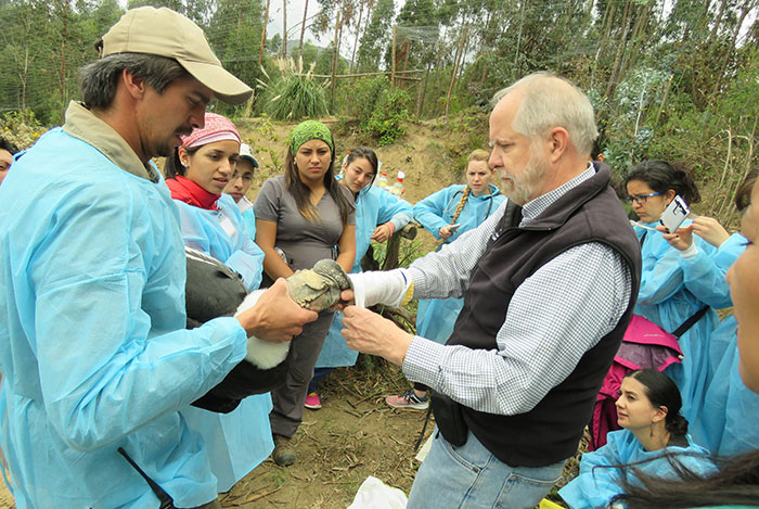 Dr. James Carpenter examines a condor in Ecuador
