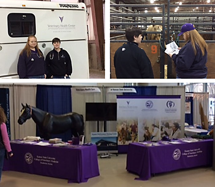 Equifest collage