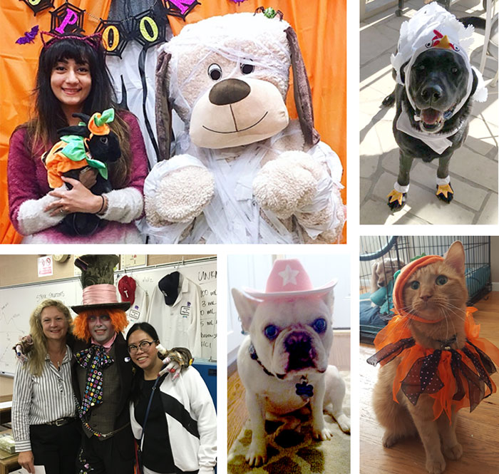 Hallowween pet pics