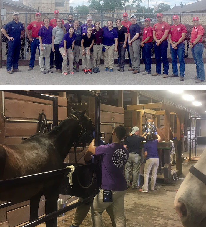 Equine Services at Fort Riley