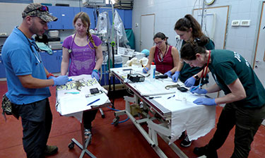 A team of Israeli zoo veterinarians and veterinary students