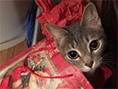 Kitten in wrapping paper