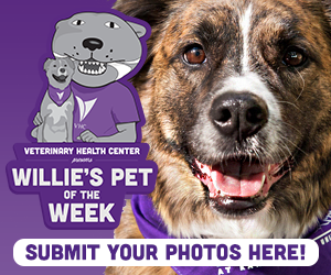 Willie's Pet of the Week