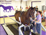 Horsing running on treadmill