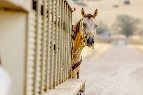 Equine Travel